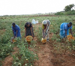 Cooperative Vegetables Farming Programme for  Eradication of Poverty among Rural Poor Women